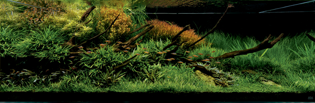 Aquário de Takashi Amano (180X60X60cm)